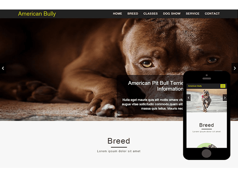American Bully – Animals Free Bootstrap Template