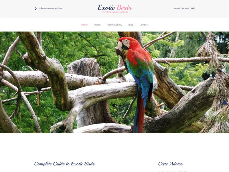 Exotic Birds Free Bootstrap Template For Pets