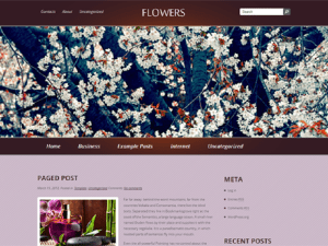 Free Theme WordPress Women