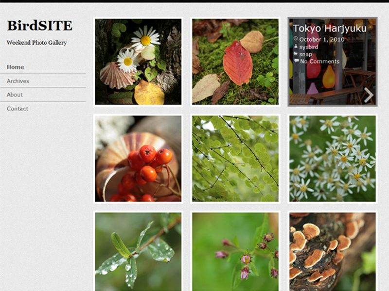 BirdSITE Free WordPress Theme Download For Photoblogging